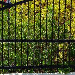 Bramyi-ogrodzenia-85